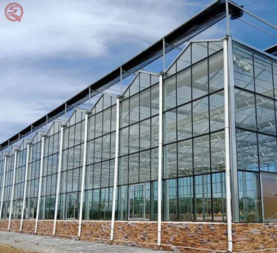 Large Size Hot-Galvanizing Greenhouse Hydroponic Agricultural for Vegetable/Garden
