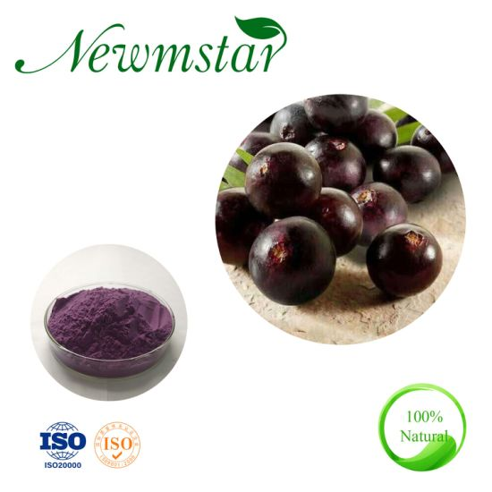 High Quality Acai Berry Extract Powder Anthocyanins25%