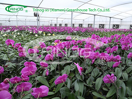 Agricultural Economical PO fiilm orchid Greenhouse for sale