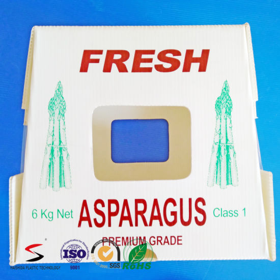 PP Plastic Agriculture Packaging Box
