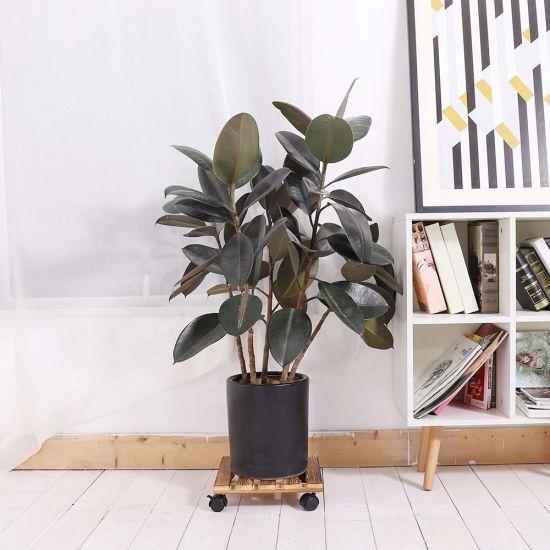 Mid Century Movable Pot Plant