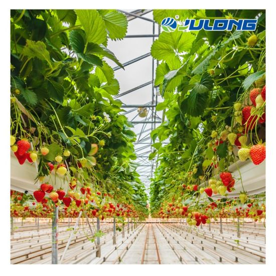 Agricultural Turnkey Project Multi Span Plastic Film Strawberry Tomato Hydroponic Polytunnel Greenhouse for Sale
