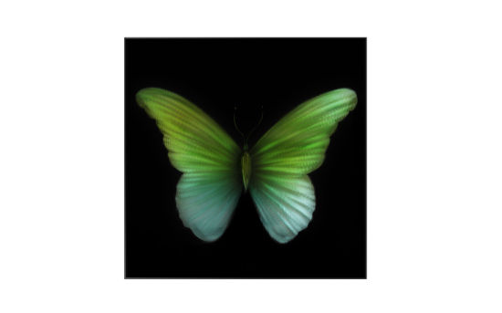 3d Beautiful Gradient Butterfly Wall Painting