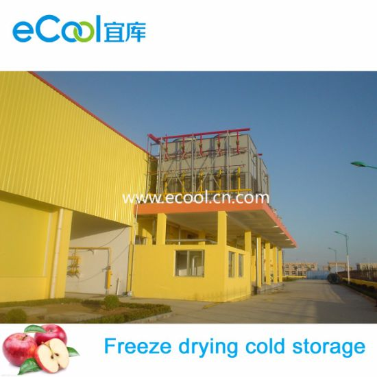Super Large Size and Capacity Super Low Temperature Freeze Drying Cold  Storage and Refrigerate Equipment for Vegetables and Fruits