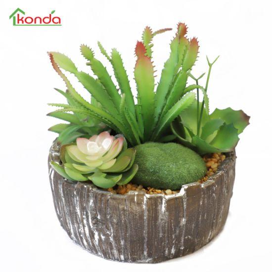 Various Models of Natural Artificial Succulent Plants Bonsai for Home Decoration