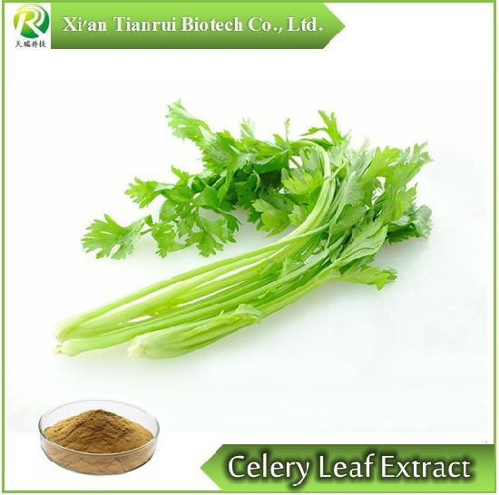 Natural Celery Leaf Power Extract /Apigenin Celery Leaf P. E. pictures & photos