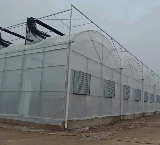 Low Cost Po Film Commercial Agriculture Single-Span Greenhouse