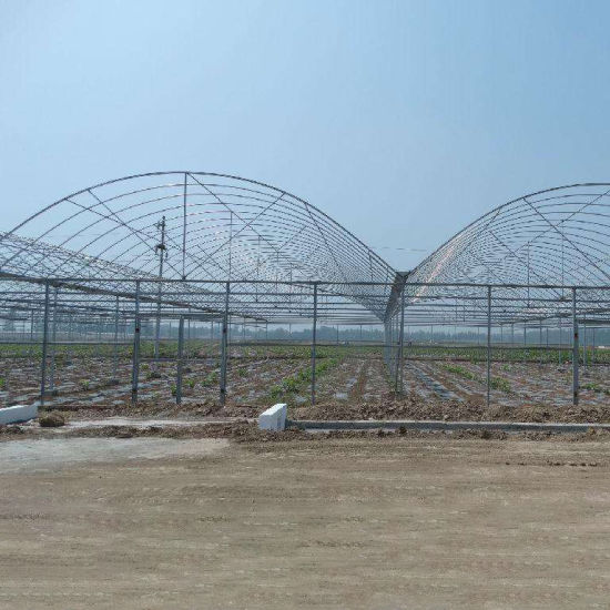 Multi-Span Advanced Plastic Film Agricultural Greenhouse for Flower Planting