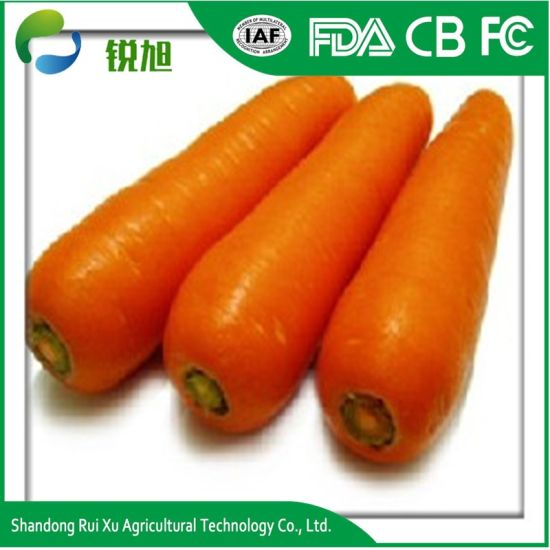 China Supplier Fresh Red Carrots