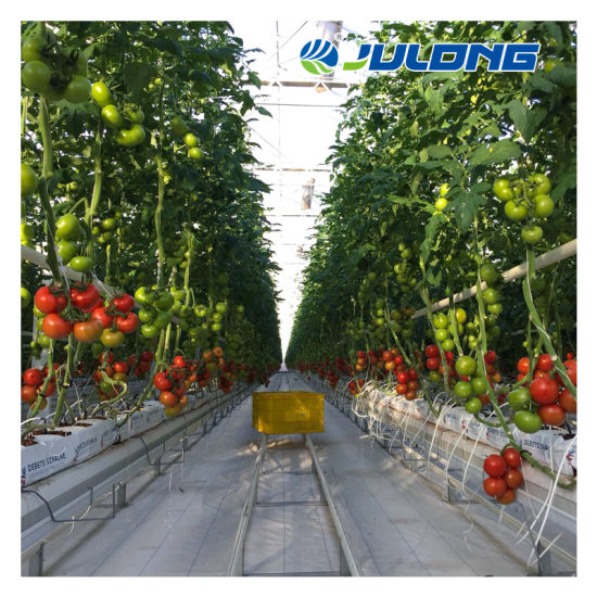 Factory Venlo Agriculture Vegetables Tomatoes Single Layer 5mm Tempered Glass Greenhouse with Hydroponic Growing Systems