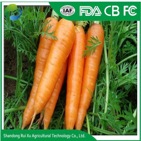 High Quality China Fresh Carrot