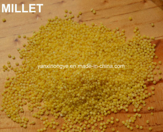 Yellow Hulled Millet Healthy Food Organic Selenium Millet pictures & photos