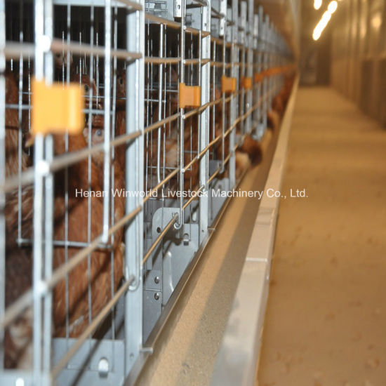 China Best Price H Type Automatic Egg Layer Chicken Farm