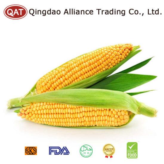 IQF Sweet Corn Cobs with Good Price