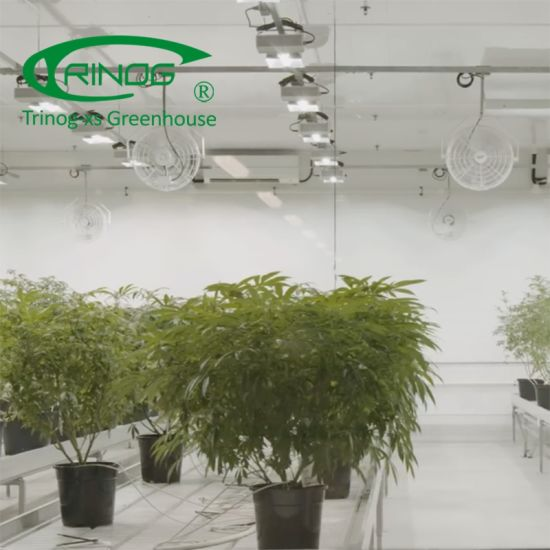 Commercial hemp greenhouses with LED light