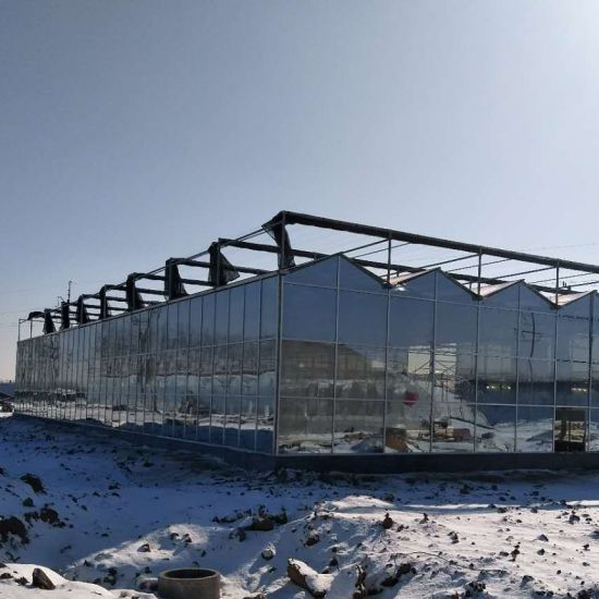 Multi-Span Glass Greenhouse with Hydroponics System
