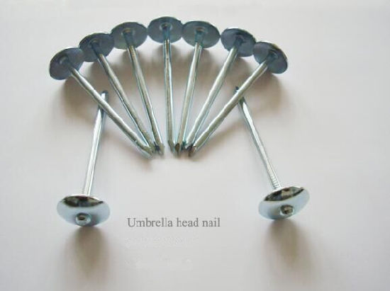 Kinds of Nails Common Nails Umbrella Head Nail pictures & photos