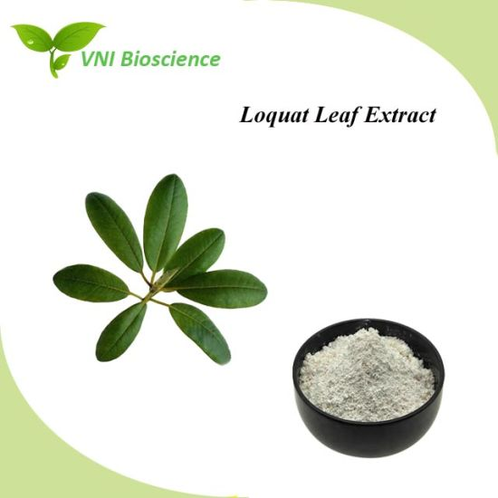 ISO SGS Certified Ursolic Acid/Eriobotrya Japonica/Loquat Leaf Extract pictures & photos