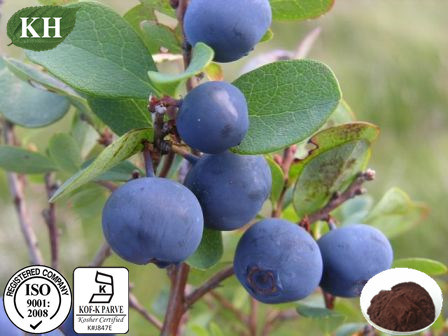 Natural Bilberry Extract 15%~30% Anthocyanidins; 15%~35% Anthocyanins pictures & photos