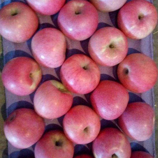 Fresh Qinguan Apple at Wholesale Price