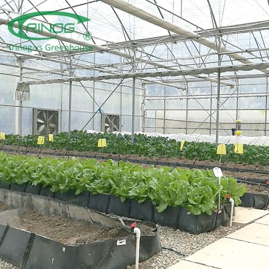 Wholesale Cheap Best Agricultural Cultivation Hydroponics System Film Greenhouse