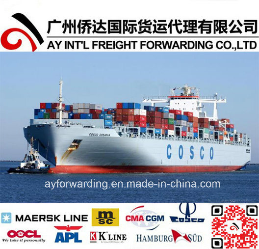 Sea Freight Forwarder to Saudi Arabia From China