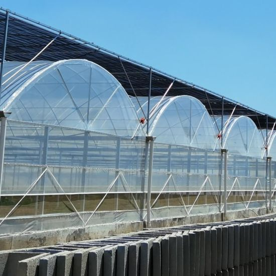 Multi-Span Agricultural Plastic Film Greenhouses for Flower