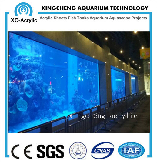 Transparent Big Viewing Acrylic Panel Aquarium