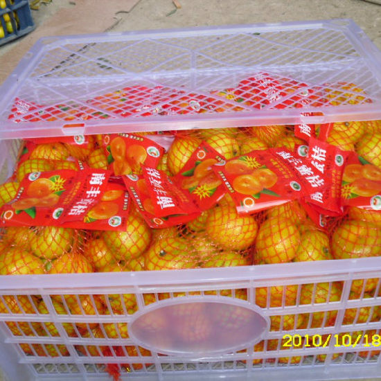 New Crop Fresh Nanfeng Baby Mandarin Orange pictures & photos