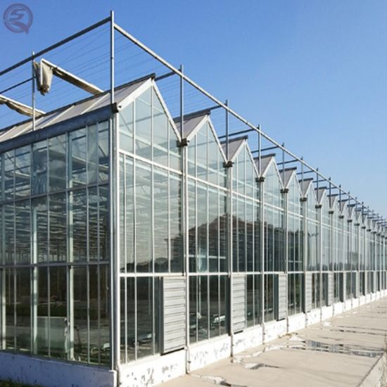Shengqiang Agriculture Venlo Green House Multi-Span Hydroponic Glass Greenhouse for Vegetables/Flowers/Tomato Growing