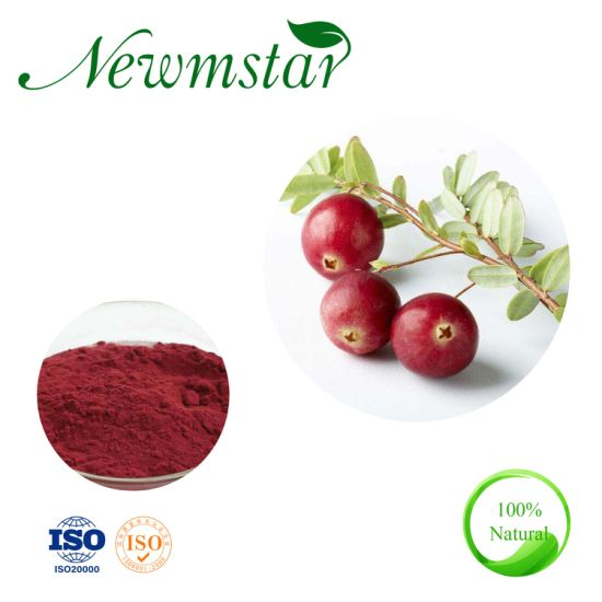 High Quality Feed Supplement Bilberry Extract 25% Anthocyanins