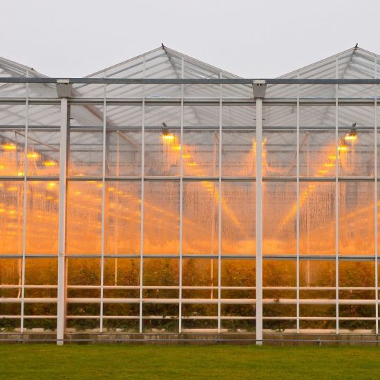 China Xinhe Factory Multi-Span Venlo Glass Greenhouse for Flower Vegetable