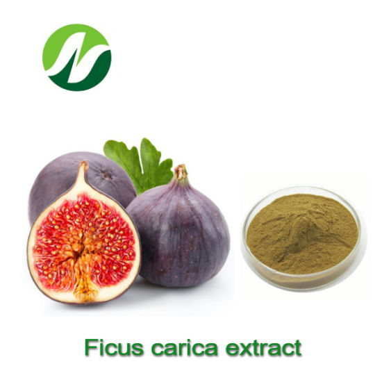 Good Quality Hot Sale 5%-10% Abscisic Acid, 1%-5% Polyphenols Ficus Carica Extract