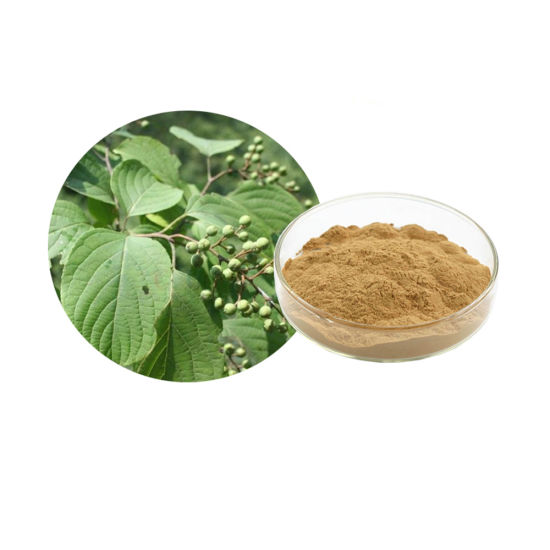 100% natural Celastrus angulatus Powder P. E 6% 10% pictures & photos