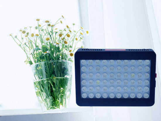 New Present Gip LED Hydroponics Growing Light for Medical Plants pictures & photos