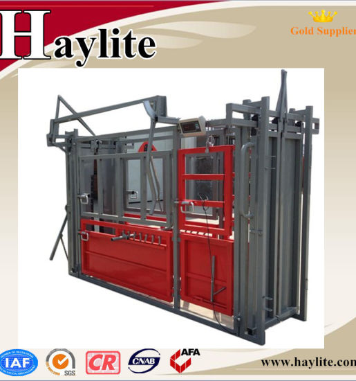 Heavy duty cattle crush used squeeze chute with scale