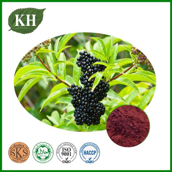 Elderberry Extract Anthocyanidins 3% to 25%; 4: 1; 10: 1