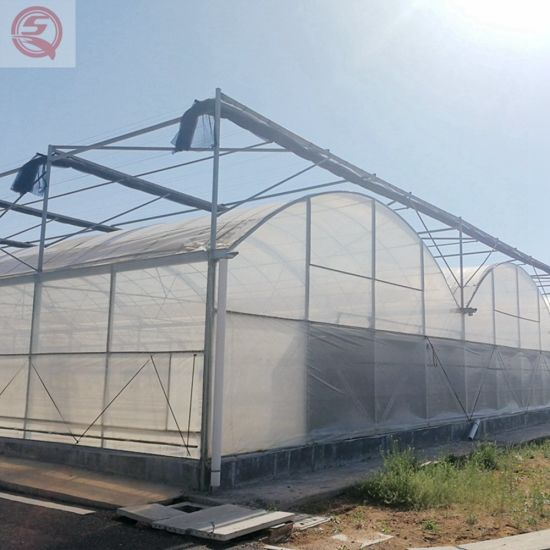 China Hydroponic Growing System Polycarbonate Plant Garden Greenhouse for Sale