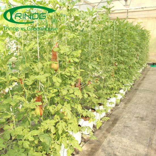 PE film Green House Hydroponics System for Vegetables/Flowers/Fruit