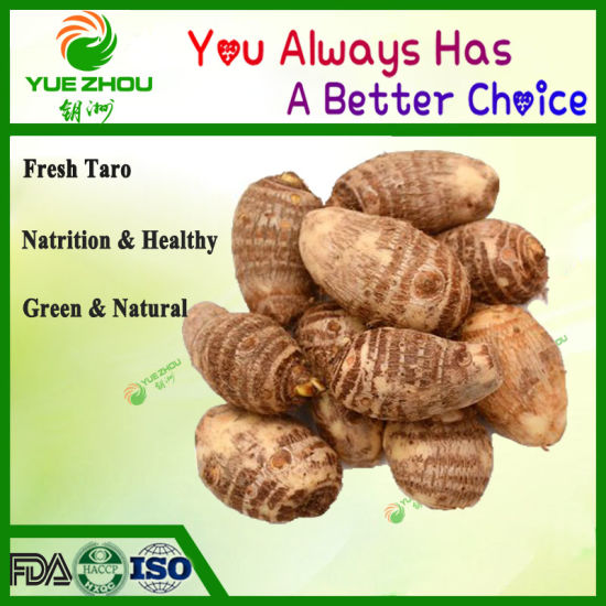 New Crop Top Quality Shandong Fresh Taro (60-80g) pictures & photos