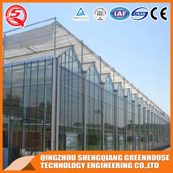 Agriculture Glass Green House for Planting Venlo Greenhouse Vegetables Flowers Greenhouse Hydroponic System Commerical Greenhouse