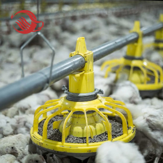 Customized Automatic Poultry Farming Equipment
