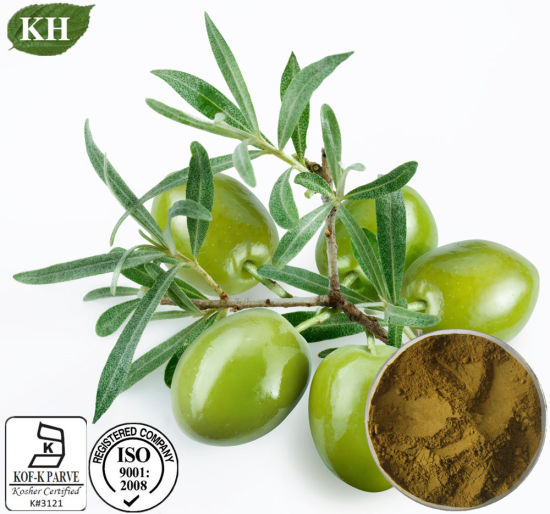 Olive Leaf Extract, Oleuropein 20%-80%, Hydroxytyrosol 5%-50% pictures & photos