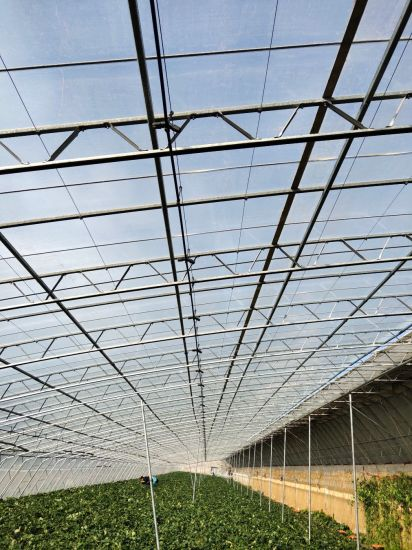 High Quality and Low Cost Agriculture Greenhouse Fruit Planting Garden Products