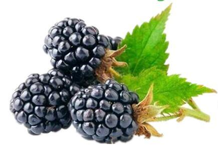 Mulberry Powder Factory Supply Best Price Great Taste Mulberry Fruit Extract Water Soluble pictures & photos