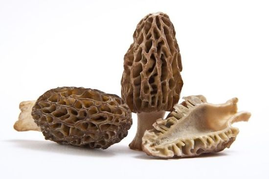 2018 Fresh Morel Mushroom Morchella Organic Food pictures & photos