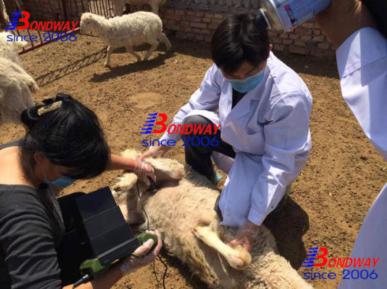 Ultrasound Scan for Reproduction Imaging of Horse, Cattle, Porcine, Goat, Pet, Farm Animals pictures & photos