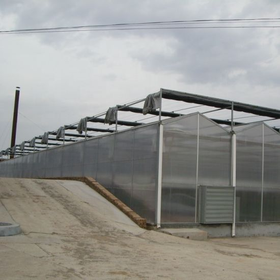 Galvanized Steel Structure PC Sheet Greenhouse with Cooling System