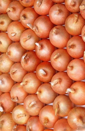Chinese Export Good Quality Yellow Onion pictures & photos
