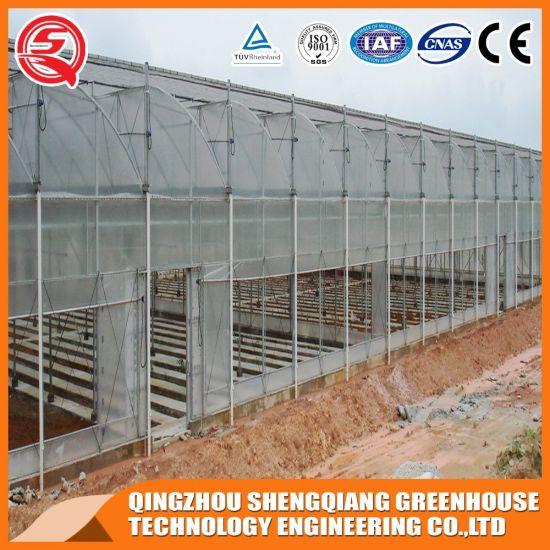 Double Layer Steel Frame/ Aluminum Profile Plastic Film Greenhouse for Vegetables/Fruit/Flowers